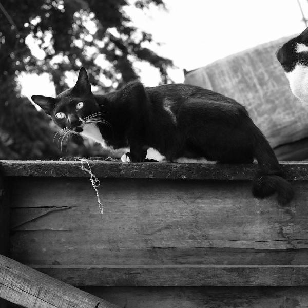 Sukarno Hatta Dan Kucingnya Historia