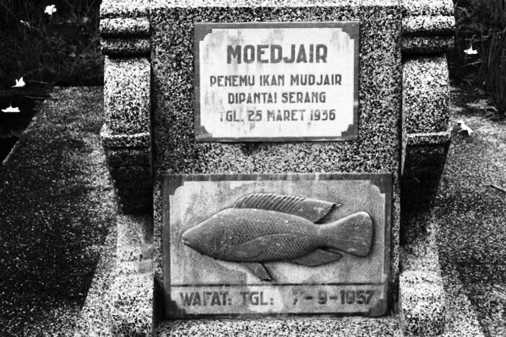 Awal Mula Ikan Mujair