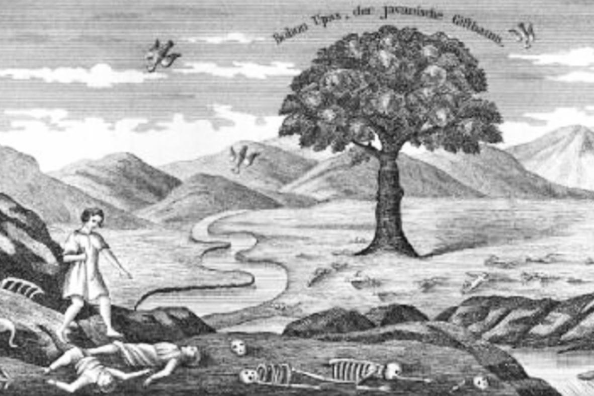 Mengupas Mitos Pohon Upas