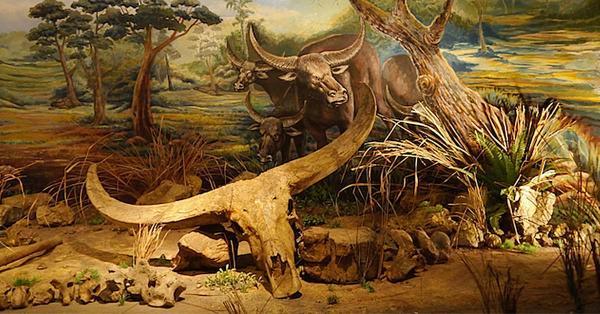 860 Gambar Binatang Zaman Purba Terbaik