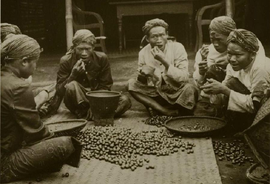 Hasil gambar untuk tanam paksa kopi daendels