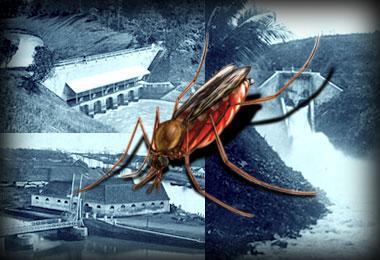 Malaria di Cihea